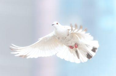 A bênção da paz